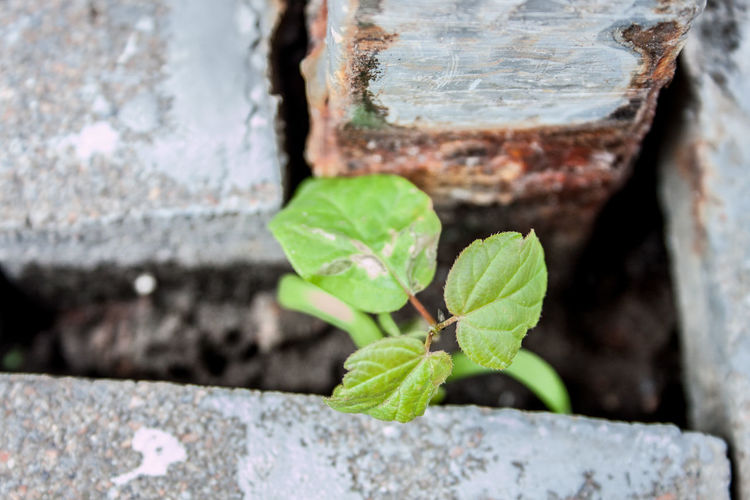 Close-up of small plant growing on wall