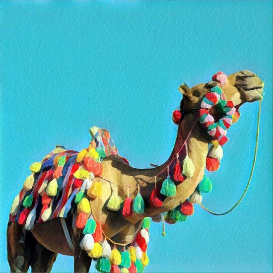 شتر شتر نقش رستم Camel Animal Colorful Prisma Art Naqsh-e Rostam Friday Iran Irantravel Iranian_photography Iranshots ایرانگردی ایران