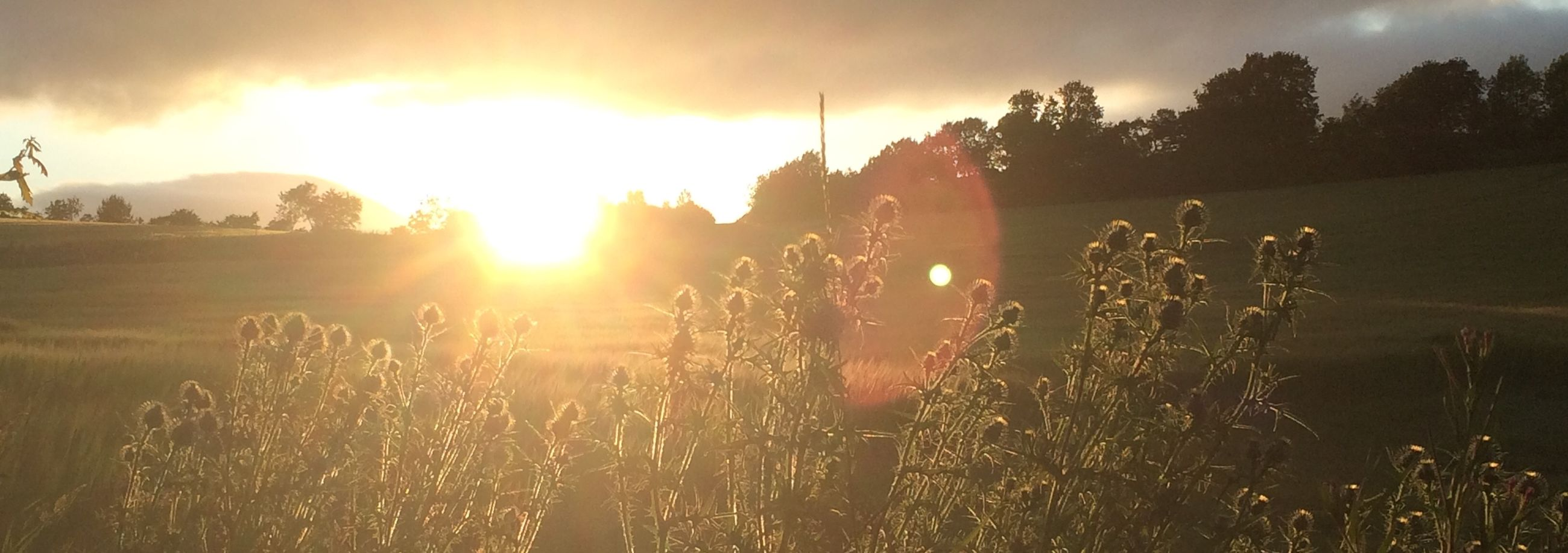 sun, sunset, sky, sunbeam, sunlight, tranquility, tranquil scene, nature, landscape, beauty in nature, scenics, field, lens flare, cloud - sky, plant, non-urban scene, silhouette, idyllic, growth, outdoors