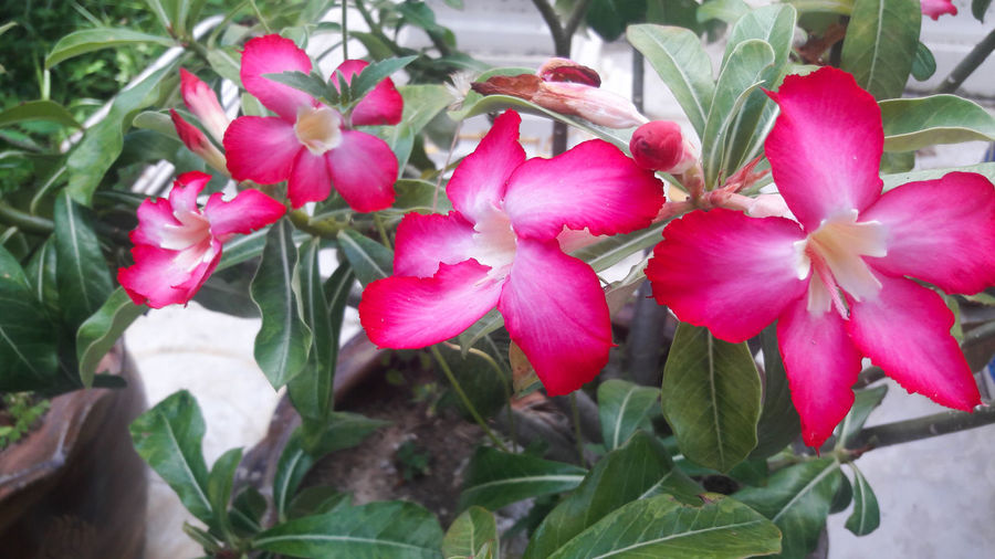 Beauty In Nature Blooming Close-up Day Flower Flower Head Fragility Freshness Growth Leaf Nature No People Outdoors Petal Pink Color Plant