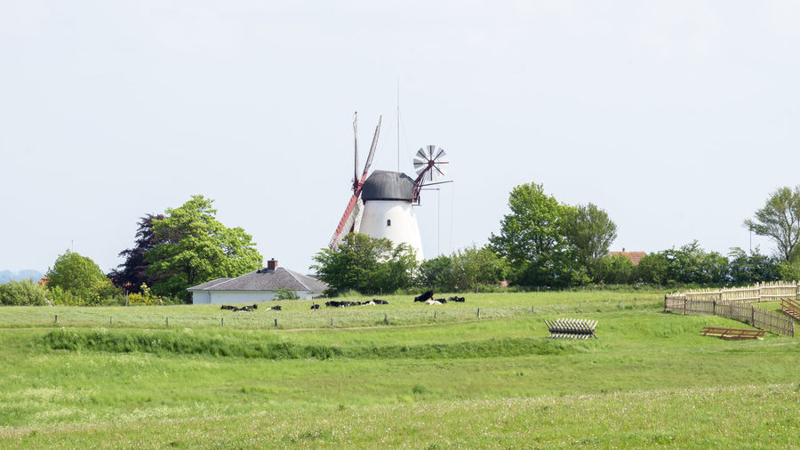 Dybbol Molle in the spring Denmark Dybbol Molle Field Grass Wind Turbine Clear Sky Fuel And Power Generation Wind Power Outdoors Windmill Mill Renewable Energy Renewable Renewable Energy Wind Turbine 1864 Turbine Environment No People Tree