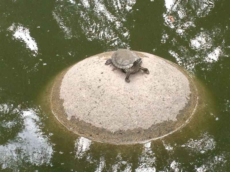 Turtle on a rock Adventure Animal Themes Animals In The Wild Art And Craft Auto Post Production Filter Backgrounds Balance Circle Close-up Directly Above Dirty Full Frame High Angle View No People One Animal Reptile Textured  Turtle Wildlife Zoology