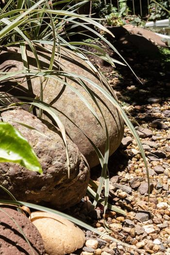 Garden Garden Decor Stones And Plants Nature Sunlight Day Land Plant EyeEmNewHere Plant Part Solid Rock Leaf Growth