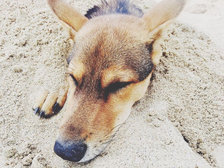 One Animal Dog Animal Themes Domestic Animals Mammal Pets Relaxation Lying Down Day No People Outdoors Close-up
