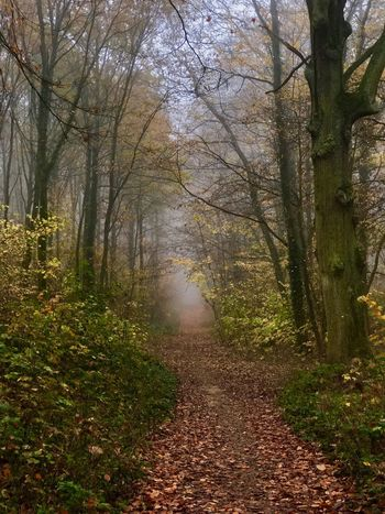 Brouillard Tree Plant The Way Forward Growth Beauty In Nature Nature Tranquility Autumn Scenics - Nature Diminishing Perspective No People Land Forest Tranquil Scene