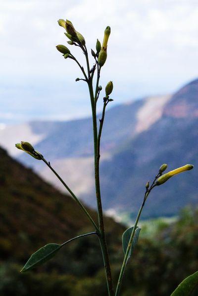 En lo alto Real De Catorce Slp San Luis Potosí Mexico En Las Montañas Blur Desenfoque Bokeh Photography Nubes Flower