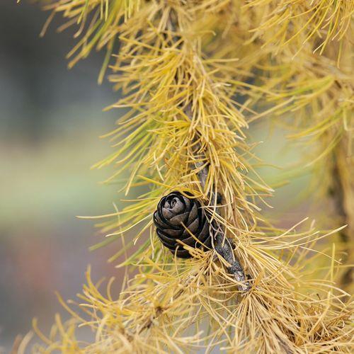 Close-up of caterpillar in nest