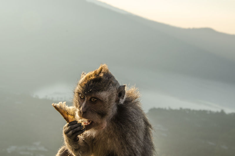 Animal Head  Animal Themes Animals In The Wild Bird Close-up Day Focus On Foreground Hiking Looking Away Low Angle View Mammal Monkey Mountain Nature No People One Animal Outdoors Portrait Sky Wildlife Zoology