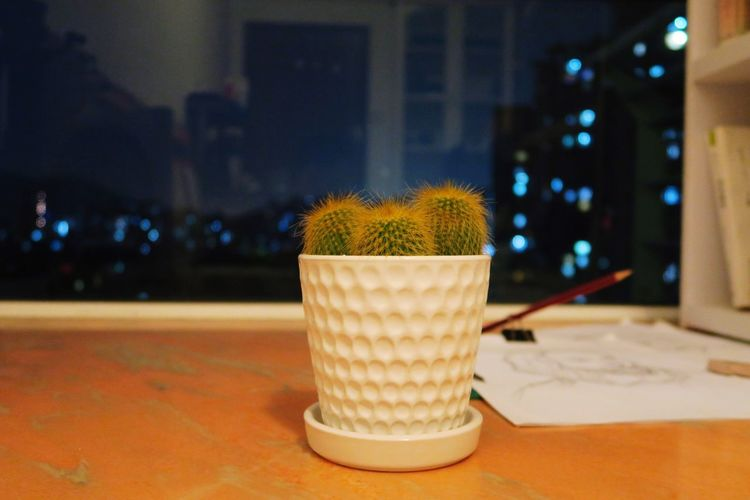 Close-up of potted plant on table by window at night