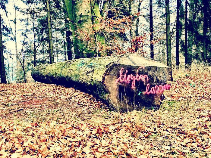 Fun In The Wood Liegen Lassen Fun Fundstück