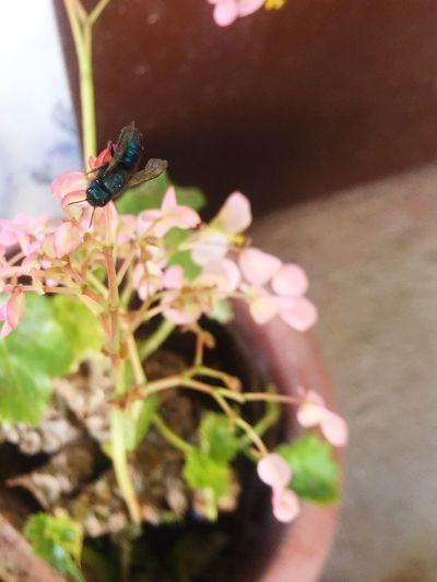 Abeja Azul Blue Bee Maravillas De La Naturaleza Animales Increbiles Insectos Fantásticos