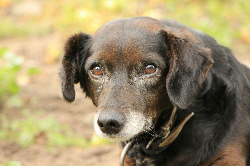 Dog Sad Saddog Sadness Sad & Lonely Village Life daddies