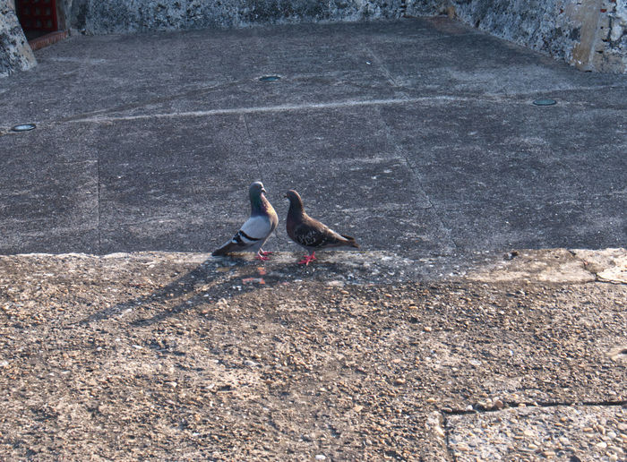 High angle view of birds perching on footpath