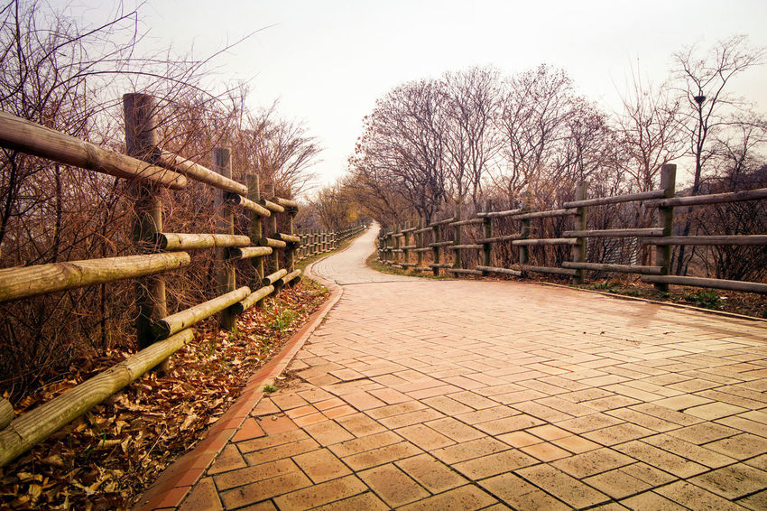 Foot Path in Pyounghwa Park,Seoul, South Korea in March 2018 Autumn City Green Color Nature Pyounghwa Seoul South Korea Winter Brown Cold Temperature Destination Fence Leaf Leaves Nobody Park Streetphotography
