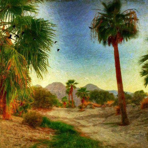 Popular Popular Photos Timages Desert Deserts Around The World Desert Beauty Palm Palm Trees Palm Tree Palmtree Palm Trees ❤❤ Palmtrees Palmporn Palmpower Palms Golf Golfing Golfcourse