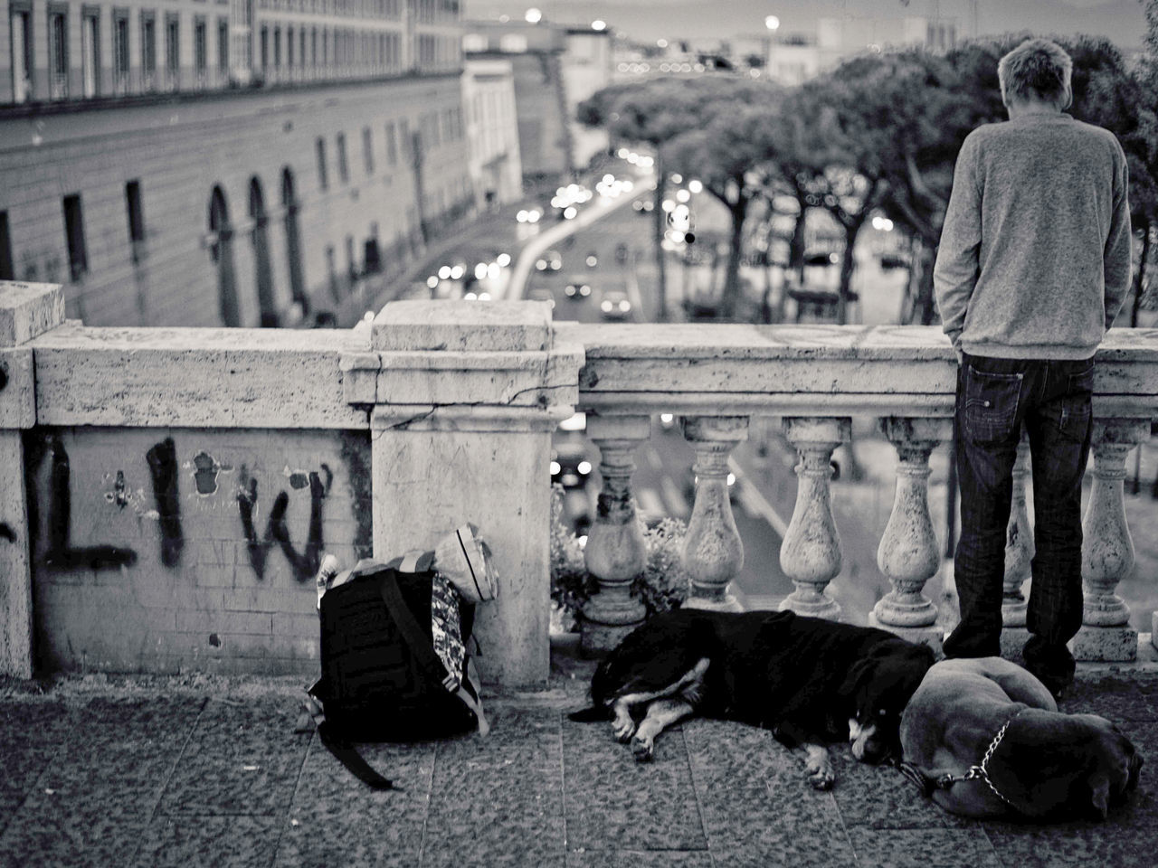 Rear View Of Man With Dogs Standing On Footbridge In City
