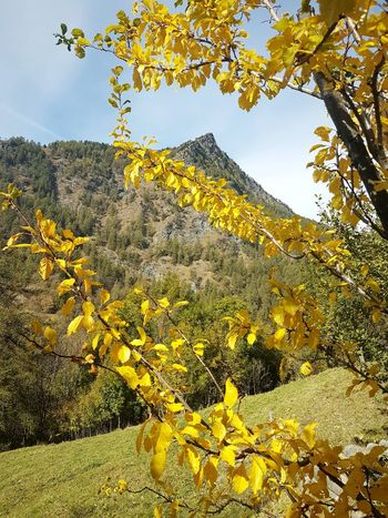 Mountain Range Mountain Peak Yellow Leaves Autumn Autumn Colors Autumn Leaves Travel Destination Yellow Nature Sky Plant Outdoors Tree Low Angle View Growth Day Beauty In Nature No People Freshness