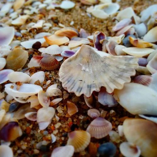 Sometime to find beautiful things you just have to do is - look down. Beach Seashore Sea Shells Shore Evening Pondicherry