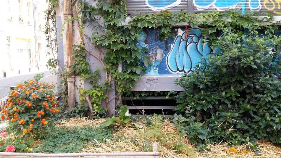 Bordeaux Bordeauxmaville Streetphotography Street Art a garden in the city France Bordeaux, France Hidden Gems  Rue Des Ayres Rue Paul Bert Colour Of Life My Year My View