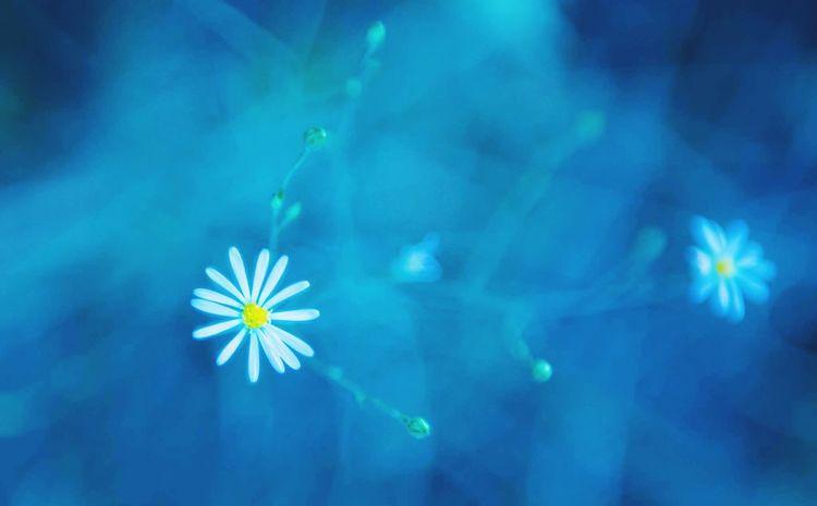 Relaxing Love Blue Autumn Heaven EyeEm Best Shots Make Magic Happen Hello World Enjoying Life Check This Out