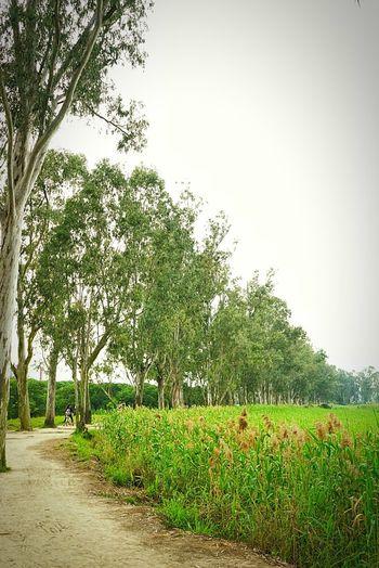 又一個下雨天。 2016 Hangout Taking Photos Photography Oldpicture Relax Enjoying Life Enjoy Good Weather Missing Blue Sky Green Peaceful Takebylgg4 HongKong