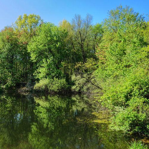 Panasonic Lumix DMC-FZ80 Reflection Tree Growth Beauty In Nature Nature Day Lake Tranquil Scene