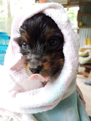 Cute Puppy First Bath Onyx