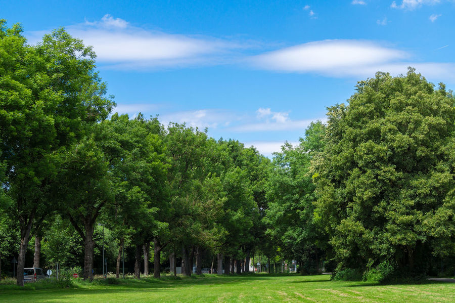 Green Trees in front of a blue Sky with white Clouds Background BIG Blue Blue Sky Clear Sky Clouds Cover Day Forest Grass Grassland Green Green Color High Landscape Leaves Nature Nature Photography Nature_collection Plants Sunny Trees White Clouds