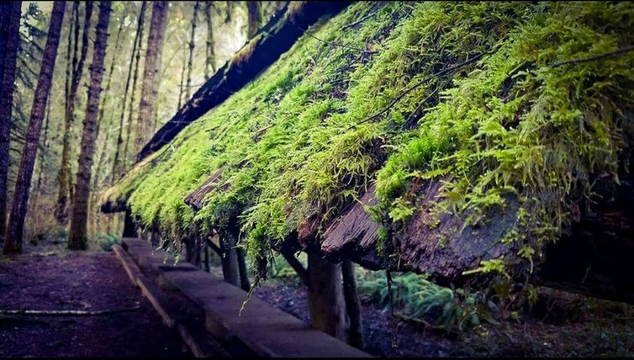 Alsea Falls Oregon Forest Photography Roof Moss Growth Nature No People Plant Outdoors Day Beauty In Nature Rural Scene Tree