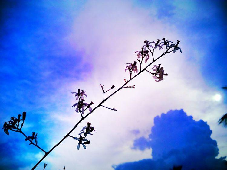 Neem Flower Low Angle View Cloud - Sky
