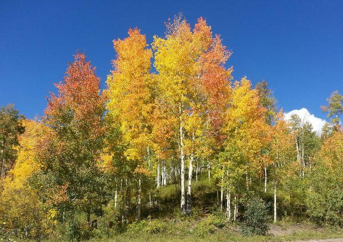 a:41581] Autumn Colors