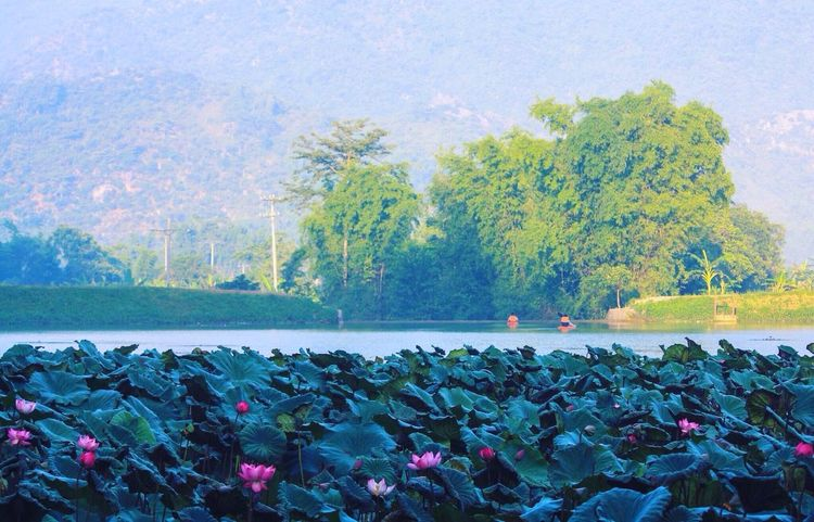 Maichau Lotus Flower Lotus Pond Water Lily Waterlilypond Lotus Water Lily Lotus Lake Kayak Scenery Landscape Hanging Out Taking Photos Hello World Enjoying Life Relaxing Nature Nature Photography Scenics Scene Scenery Shots Scenic Water Vietnam