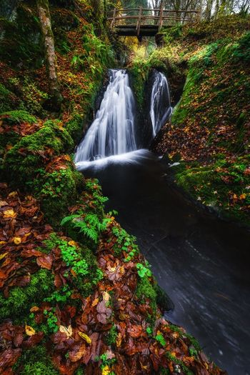 Autumn Colors Waterfall Water Long Exposure Nature Beauty In Nature Forest Tree Freshness River Motion Morning Nature Scenics Www.alexander-schitschka.de The Week On EyeEm Wasser Tree Germany Travel Destinations Beauty In Nature