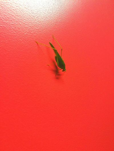 Insect Textured  Close-up Red Insect Green Color Wall - Building Feature Wildlife Animal Themes Studio Shot No People Red Background Freshness Vibrant Color Color Enhanced Full Frame Fragility