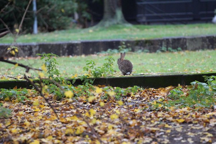 Kaninchen Im Herbst Autumn Autumn17 Herbst17 🦋 Animal Themes Selective Focus Leaf No People One Animal Animals In The Wild Day Nature Outdoors Bird Plant Growth Close-up Mammal Nature