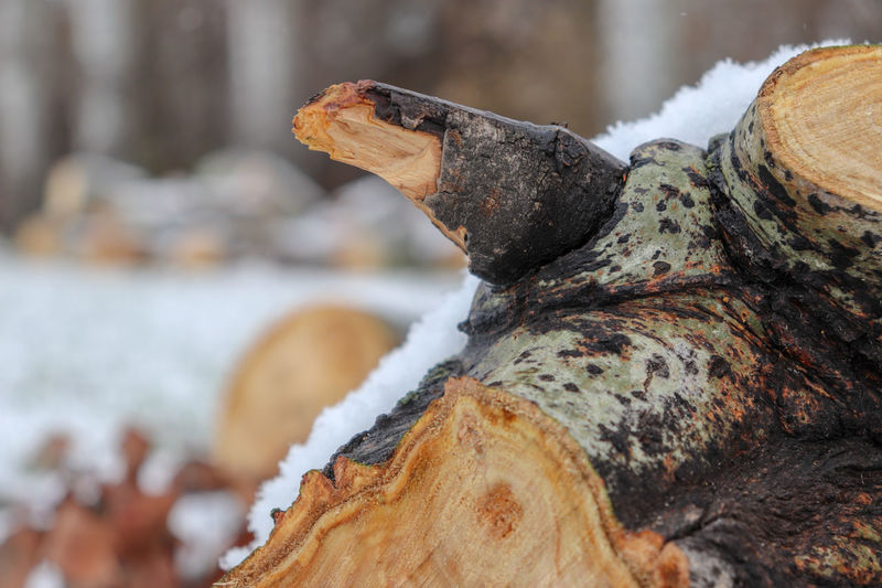 Close-up of log on rock in winter