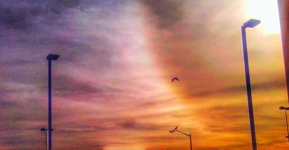 Sun Sun Effect Bird Silhouette Clouds Clouds And Sky Urban Filter