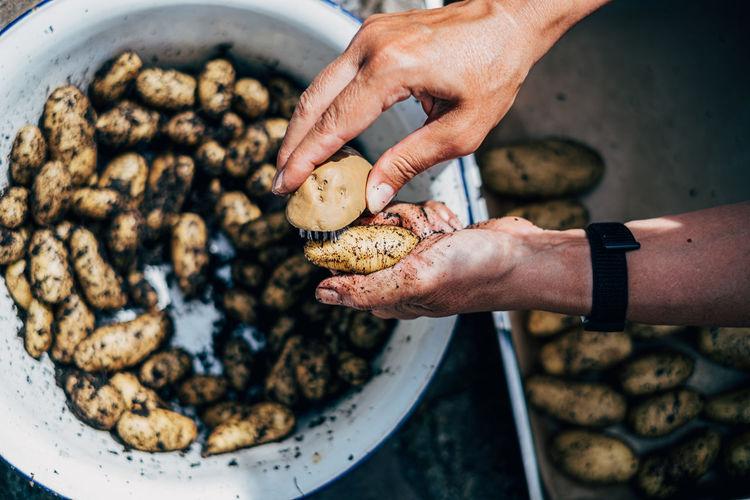 Human hand cleaning fresh potatoes