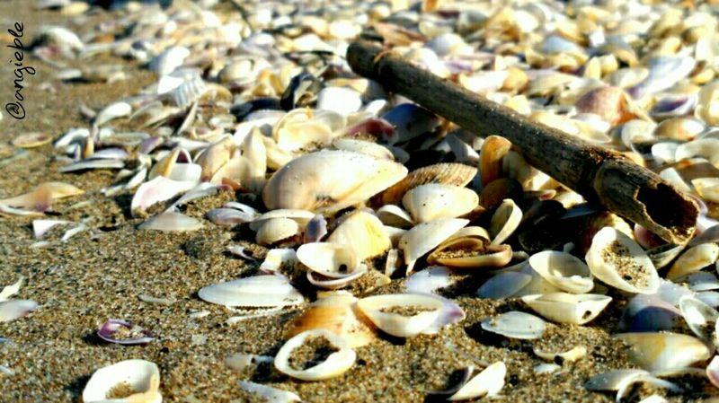 Shells Shells Beachphotography Sand Platjaderiumar Enjoying Life Estiuetdesantmarti Catalonia Catalunya Deltadelebre Sunnyday☀️ Beaches <3