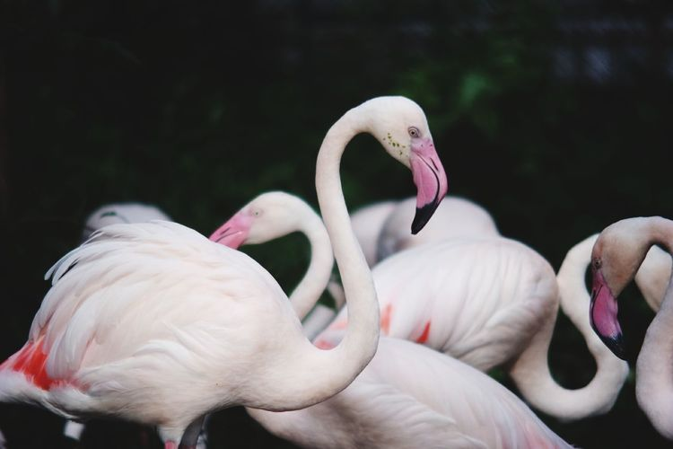Close-up of flamingos perching outdoors
