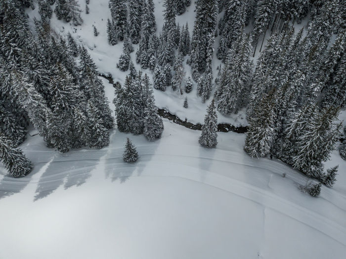 Aerial view of snow covered trees in forest