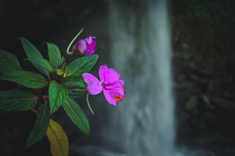 Purple flowers growing against waterfall