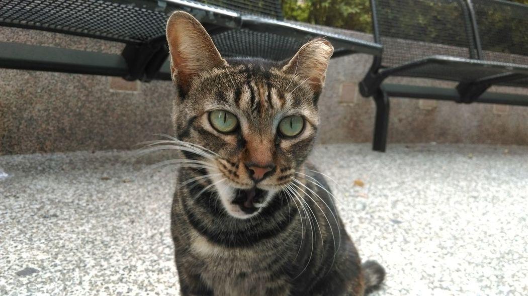 Taking Photos No Fliter  Stray Cat Cat Lovers