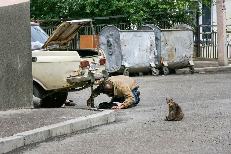 Cat Sitting By Mechanic Repairing Car On Road