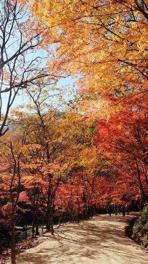 Autumn tree in sunlight