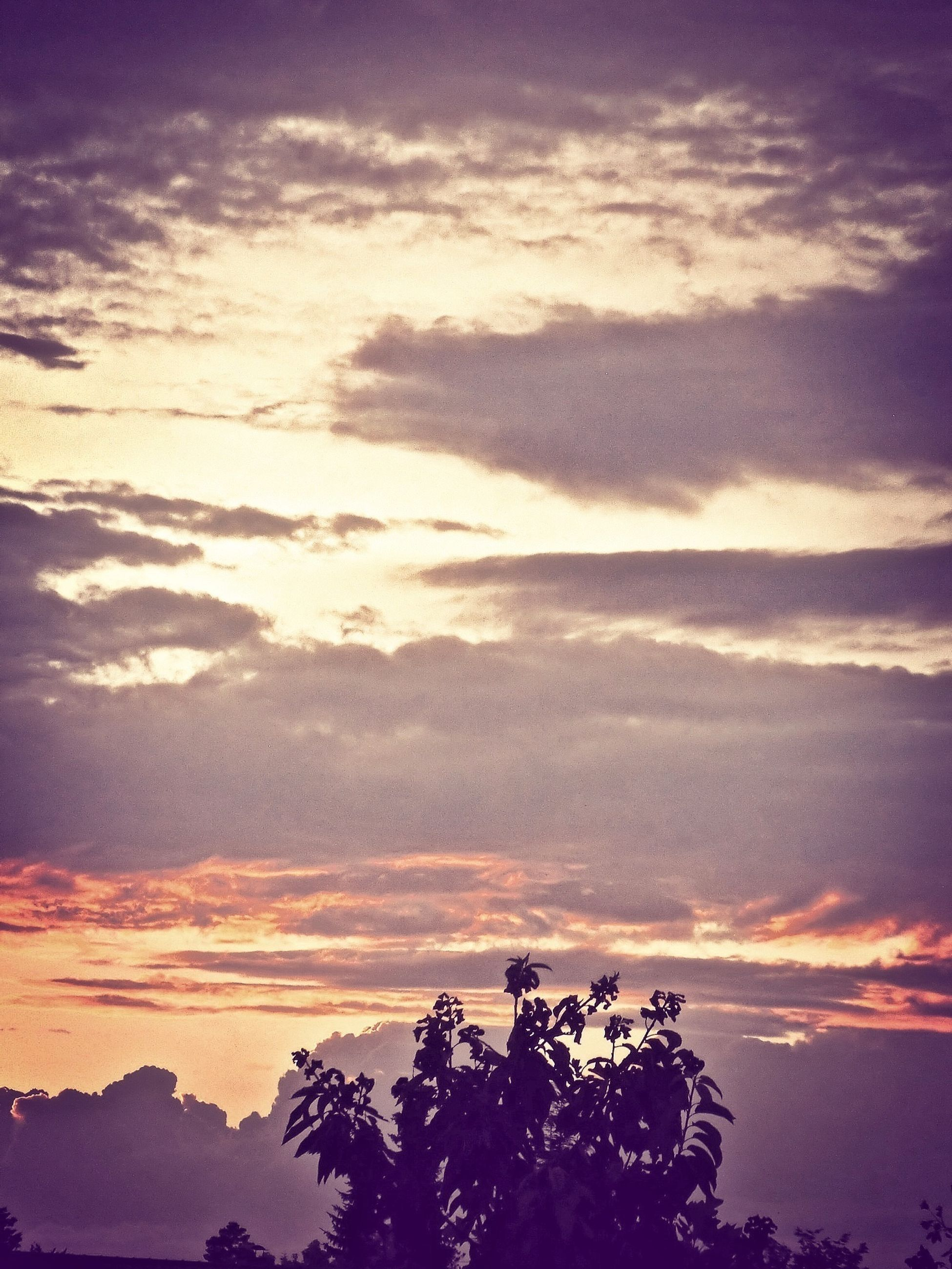 tree, scenics, tranquility, silhouette, beauty in nature, tranquil scene, sunset, sky, cloud - sky, nature, idyllic, low angle view, orange color, cloud, dramatic sky, majestic, outdoors, no people, non-urban scene, weather
