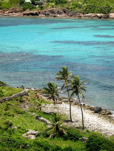 Beach Beauty In Nature Day Grass Green Color High Angle View Landscape Nature No People Outdoors Palm Tree Sand Scenics Sea Tranquil Scene Tranquility Travel Destinations Tree Water Stbarths Stbarth Frenchwestindies