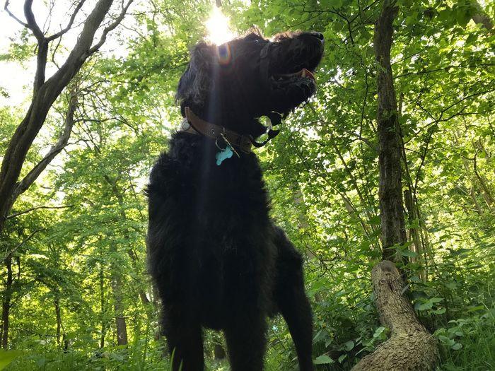 Sun dog Mammal Animal Themes One Animal Animal Domestic Animals Vertebrate Domestic Dog Pets Canine No People Plant Tree Nature Sunlight Black Color Standing