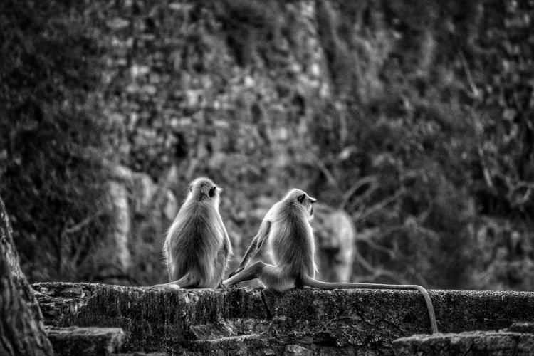 Monkeys chilling out