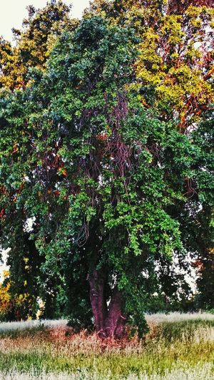 Magic Of Nature Check This Out Tree_collection  TreePorn Beauty Of Nature Tree Porn Tree Love Eyeem Photography Sacramento Check This Out!